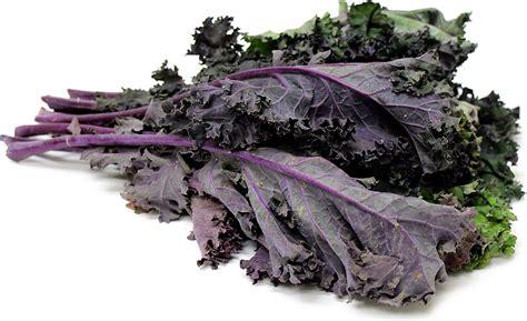 manfaat  khasiat kale red russian  kesehatan
