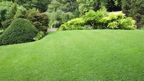 a 1 landscaping lawn care vancouver guide and important information for home owners