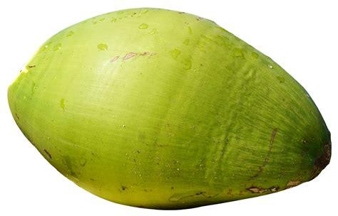 green coconut fruit png image pngpix