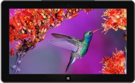 beautiful themes for windows 10 beautiful birds windows 10 free theme