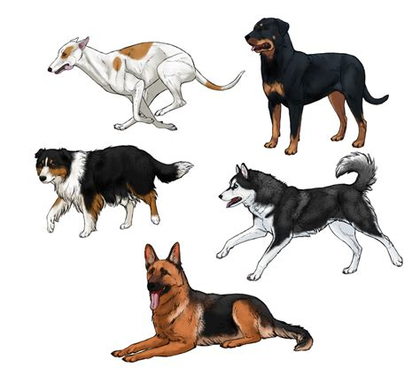 how for a to puppies how to draw a details make the difference