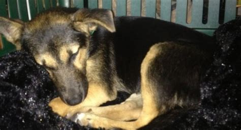 Richards Sleeps With Dogs by Reunited Florida Missing Nearly Two Years Turns Up On