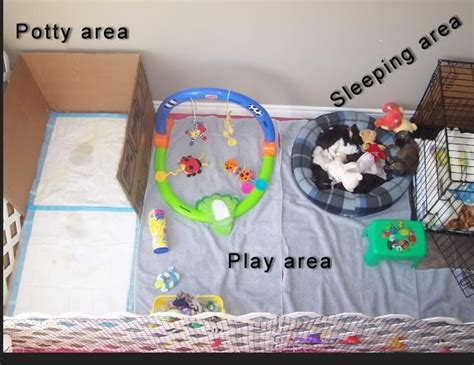 puppy potty apartment best 25 puppy room ideas on