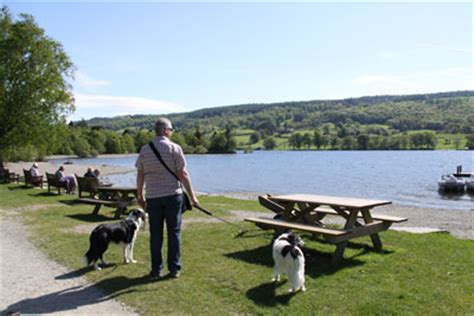 Cottages To Rent In Lake District With Dogs barking mad in the lake district cottages in the lake