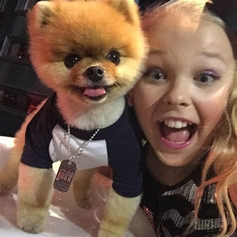 Famous People Who Own Yorkie Poms | 23 celebrities pose for pictures with jiff the pomeranian