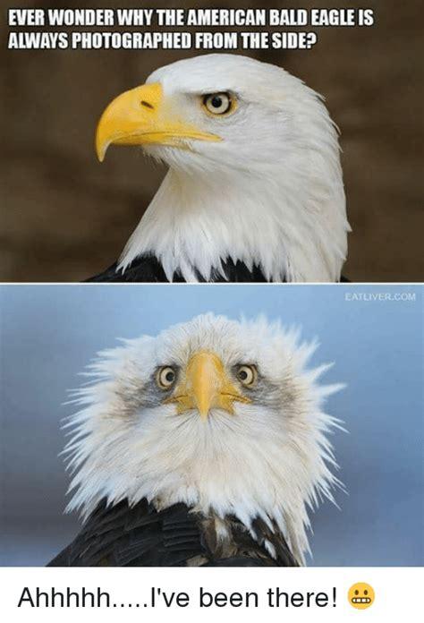 Bald Eagle Meme - 25 best memes about american bald eagle american bald