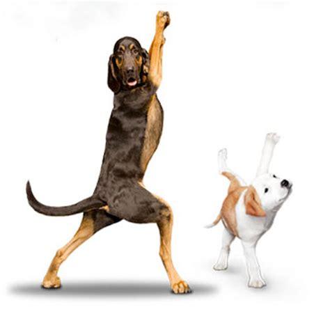 imagenes de perro haciendo yoga los perros tambi 233 n hacen yoga yorokobu