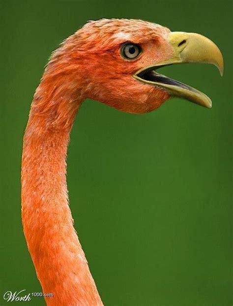 linkear imagenes html cruzas raras de animales photoshop in vitro taringa