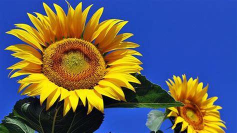 fiori estivi per matrimonio fiori pi 249 belli per un matrimonio estivo