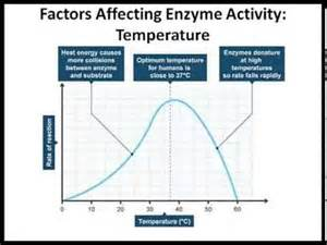 Enzyme lab effect of temp and ph youtube