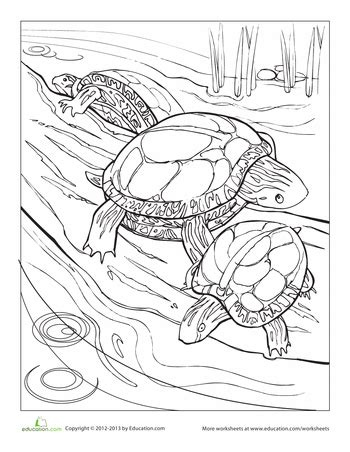 coloring page painted turtle painted turtle coloring page painted turtles coloring