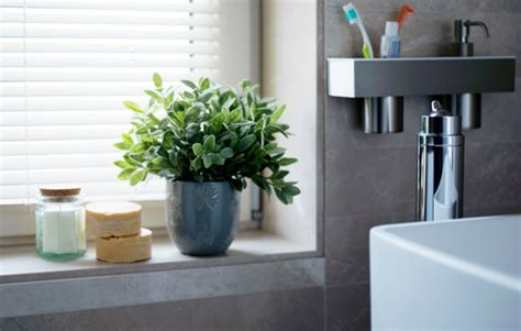 Bathroom Plants Smell 10 Tips To Green Clean Your Bathroom Realestate Au