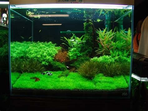plants for tropical fish tanks manage your freshwater aquarium tropical fishes and