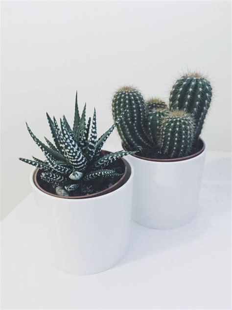indoor cactus ideas  pinterest cactus house