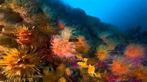 imagenes de otoño en hd paisajes marinos hd mare nostrum creative commons paola