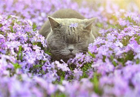 imagenes de flores invernales 17 s 246 ta djur som 228 lskar blommor dr 246 mhem tr 228 dg 229 rd