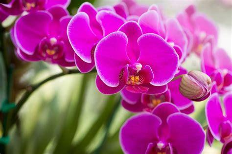 foto di fiori per compleanno fiori per compleanno foto ia37 187 regardsdefemmes