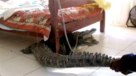 man spends night  croc  bed video abc news