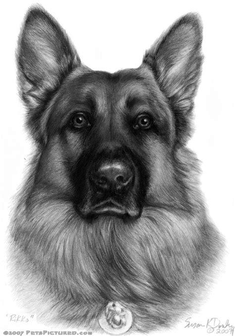 german shepherd drawing rikko k9 officer german shepherd portrait original pencil drawing prints