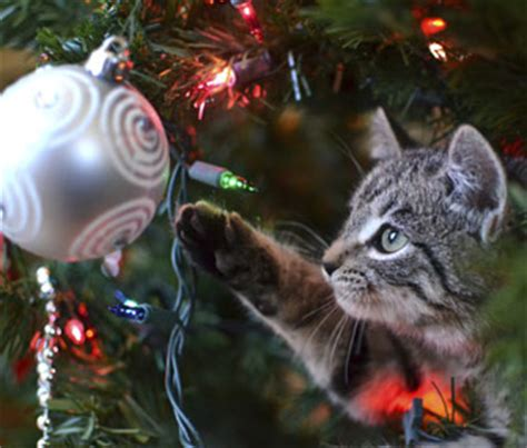 how to kitten proof your house for the holidays