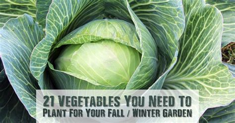 what do you plant in a fall garden 21 vegetables you need to plant for your fall winter