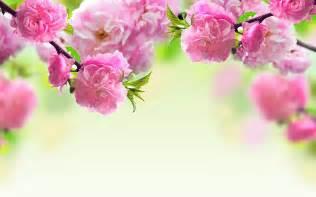 Hd Images Of Flowers Flowers Wallpaper Hd For Desktop Free Download Full Screen