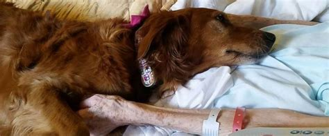 how to comfort dying dog hospice therapy dog comforts dying patient in heartwarming