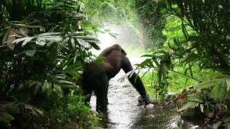 Jungle sounds for relaxation rainforest sound monkeys and birds