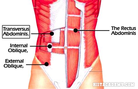 work  muscle  tighter  abs hiit academy
