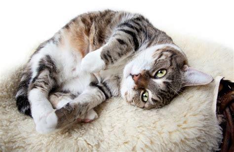11 strange cat behaviors pawculture