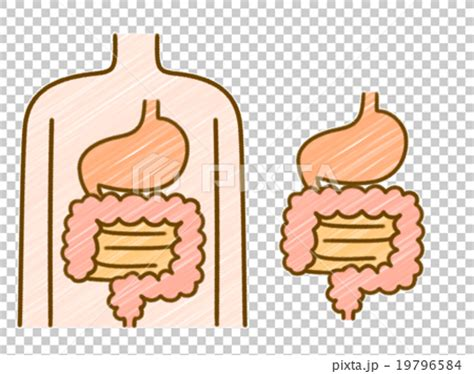 Stool In The Stomach by Stomach Bowel Intestine Stock Illustration 19796584