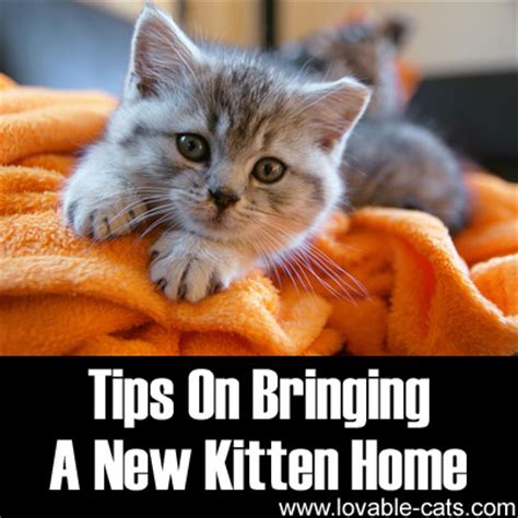 bringing a new home lovable cats tips on bringing a new kitten home lovable cats