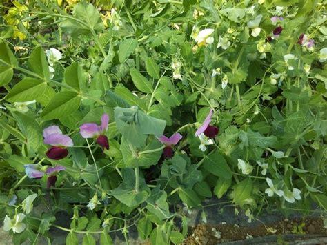 fiori di co nomi nomi di fiori 17 migliori idee su giardino di fiori su
