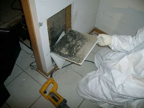 how to kill black mold tags archives what kills mold basement mold archives alliance restoration