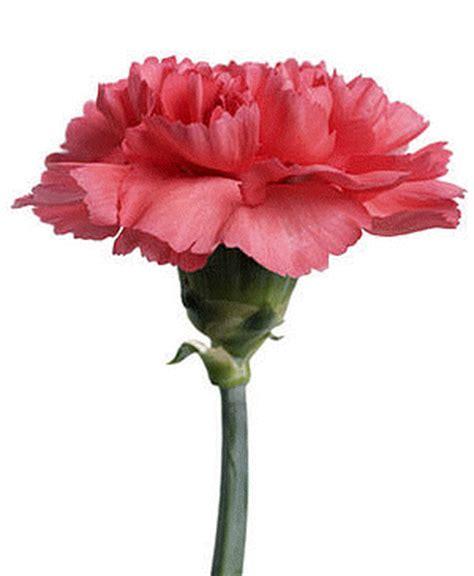 alle verschillende bloemen bloemen alles over verschillende bloemen