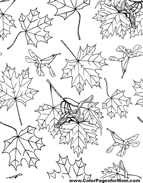 leaves coloring pages for adults advanced leaves coloring page 36