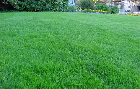 how to prepare lawn for fall corner