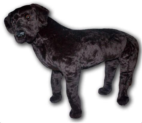 dog house dimensions for labradors dog mannequin model labrador lab full size black real ebay