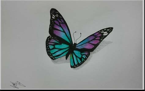 drawings with color butterfly color pencil drawings butterfly colored pencil