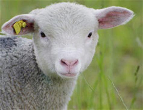 Bewerbung Anlagen Kennzeichnen Ohrmarken F 252 R Schafe So Kennzeichnen Sie Die Tiere