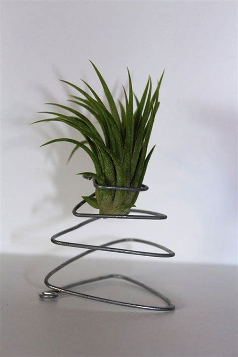 Apartment Therapy Air Plants 38 Best Images About Air Plants On Air Plant