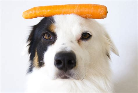 can dogs carrots can dogs eat carrots