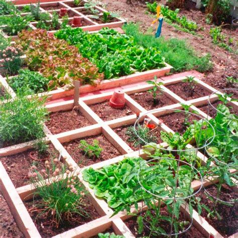 Beginner Vegetable Garden Layout 17 Best Ideas About Vegetable Garden Layouts On Garden Layouts Garden Design And