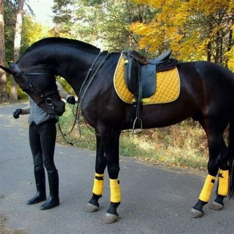 black n yellow black n yellow gorg all about horses pinterest
