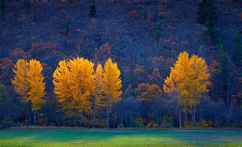 of oregon colors 20 stunning photos of oregon s fall foliage that oregon