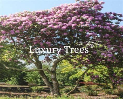 Sichtschutz Immergr N Winterhart 1853 by Sichtschutz Aus Pflanzen F 252 R Garten Terrasse 187 Luxurytrees 174