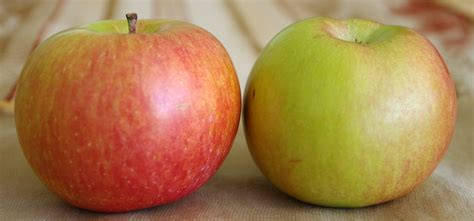 App L by Fuji Elmas箟 Fuji Apple Fuji Apfel