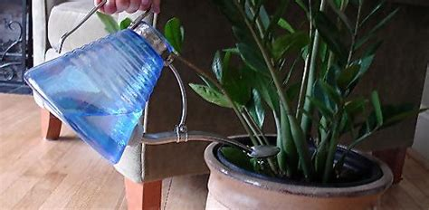 tips on how to water houseplants todays homeowner