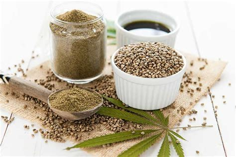 hemp for dogs an overview of hemp for dogs nation
