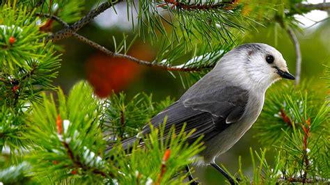 birds pictures ikbhal beautiful birds